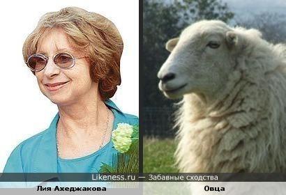 Овца похожа на артистку Ахеджакову. Такие ассоциации.