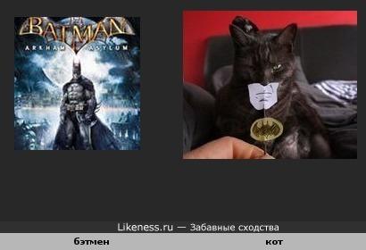 Бэтман похож на кота