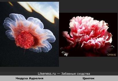 Медуза - цветок