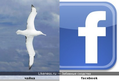 чайка попала в социальную сеть