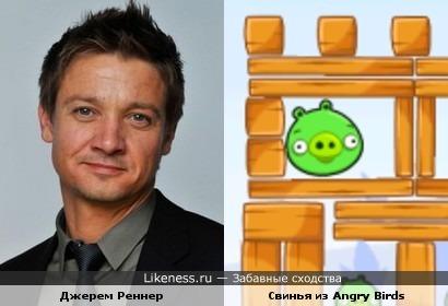 Джерем Реннер чем то похож на Свинью из Angry Birds