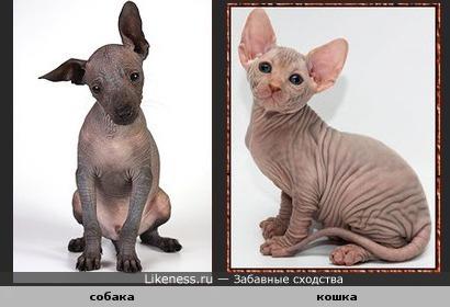 собака похожа на кошку(парадокс)