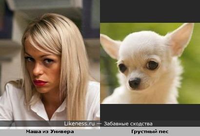 Метки актрисы знаменитости собаки