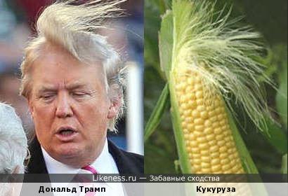 Дональд Трамп похож на кукурузный початок