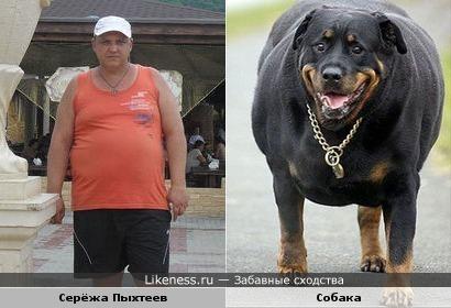 Сергей Пыхтеев похож на собаку