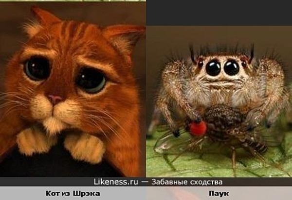 Кот из Шрэка похож на паука