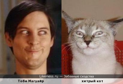 Тоби Магуайр похож на хитрого кота