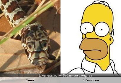змея похожа на Г.Симпсона