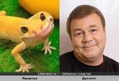 Ящерица похожа на Дукалиса