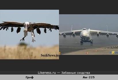 Птичка и стальная птичка