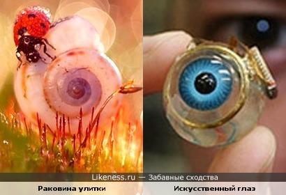 Раковина улитки и искусственный глаз