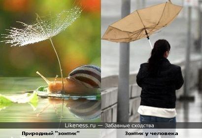 Зонтики бывают разные...