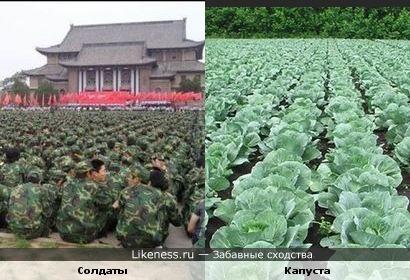 Солдаты в форме напомнили капусту в поле