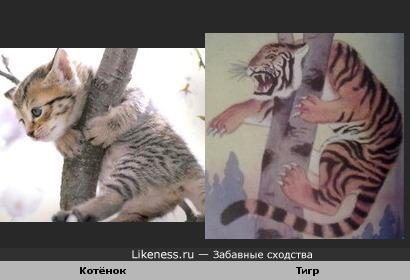 """Увидев фото этого котёнка, вспомнила иллюстрацию к сказке """"Охотник и тигр""""(Сказки народов севера)"""