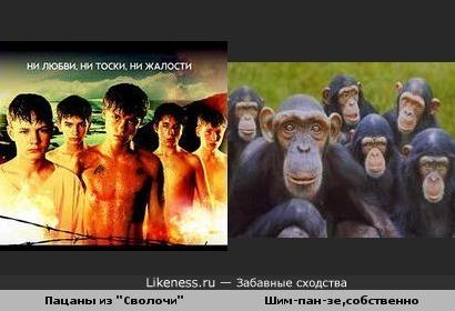 """Шимпанзе и """"Сволочи"""""""