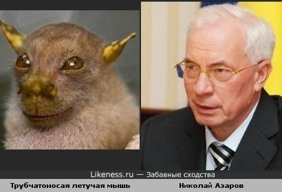 Летучая мышь похожа на премьер-министра Украины