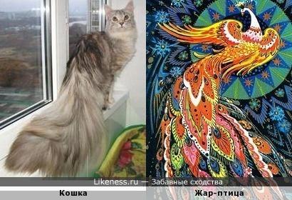 Кошка и жар-птица))