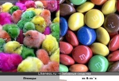 Птенцы похожи на m & m`s