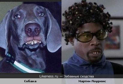 Мартин Лоуренс в образе похож на Собаку