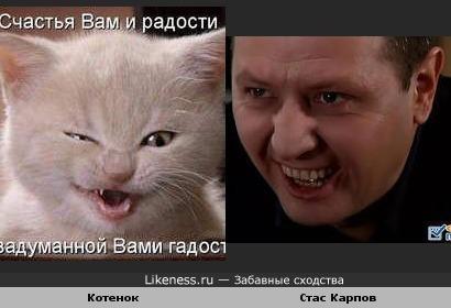 Котенок похож на Стаса Карпова