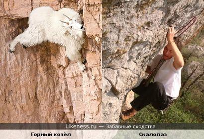 У людей и животных есть сходства