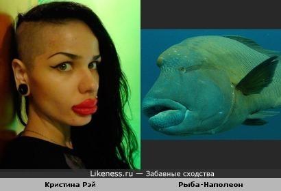 Явное сходство)