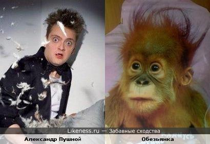 Александр Пушной похож на обезьянку