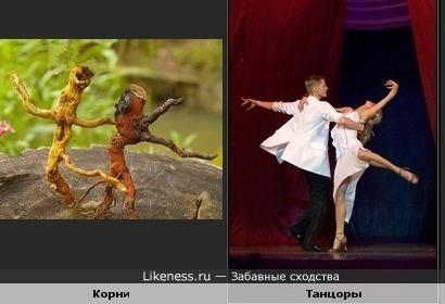 Корни дерева похожи на танцоров