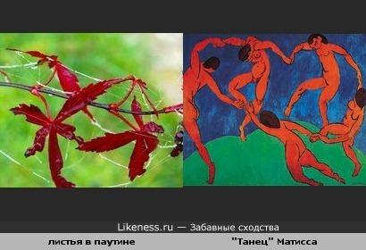 """Листья в паутине похожи на картину Анри Матисса """"Танец"""""""