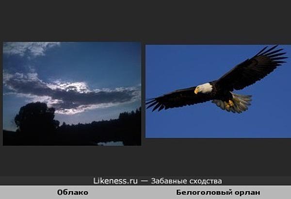 Облако похоже на белоголового орлана