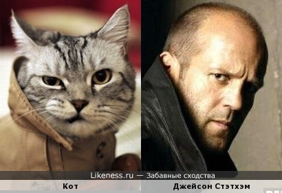 Кот в плаще похож на Джейсона Стэтхэма