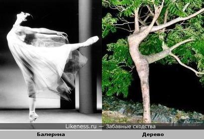 Дерево,выращенное балериной