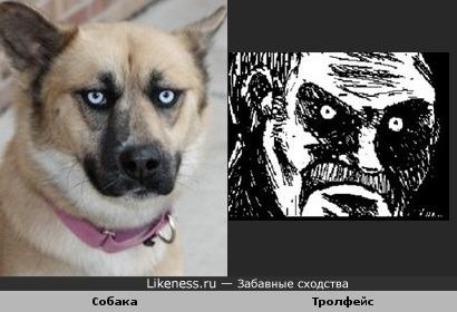 Собака похожа на Тролфейс
