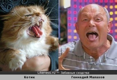 Котик и Геннадий Малахов... :-)