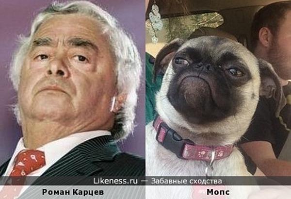 Роман Карцев и мопс
