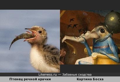 Такие разные птички...