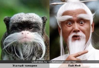Усатые бородатые