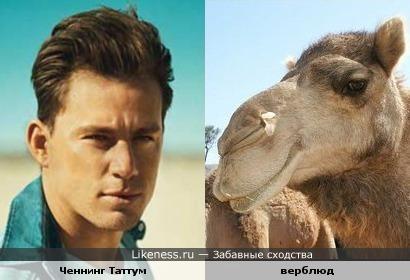 Ченнинг Таттум похож на верблюда