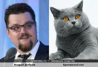 Андрей добров и Британский кот