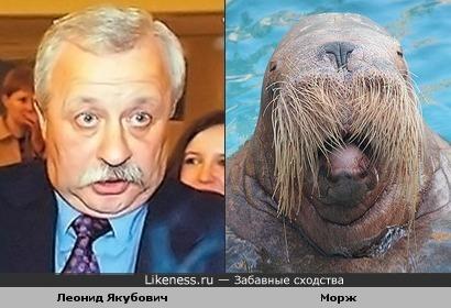Леонид Якубович и морж