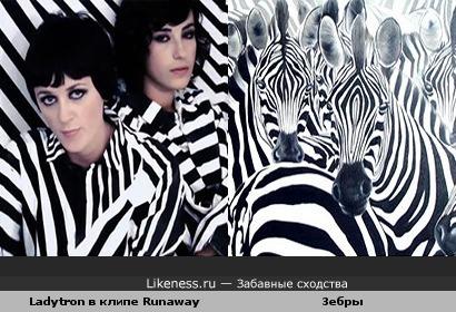 Ladytron в клипе Runaway похожи на зебр