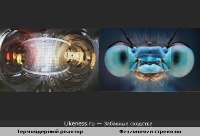Панорамный вид внутри опытного термоядерного реактора напоминает голову стрекозы