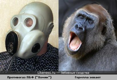 """Противогаз """"Хомяк"""" похож... на гориллу"""