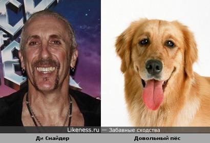 Ди Снайдер и довольный пёс