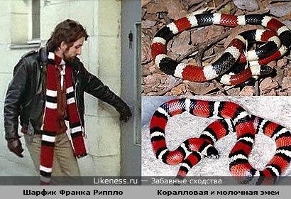 Шарфик Франка Риппло в одном из фильмов явно имитирует окрас двух змей