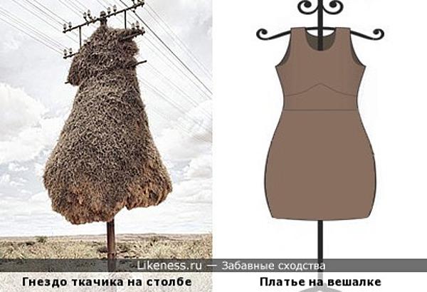 Жутковатое гнездо птицы общественный ткач на столбе напоминает платье на вешалке
