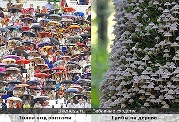 """Толпа людей под зонтами и """"толпа"""