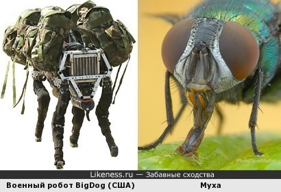Американский военный робот BigDog напоминает насекомое