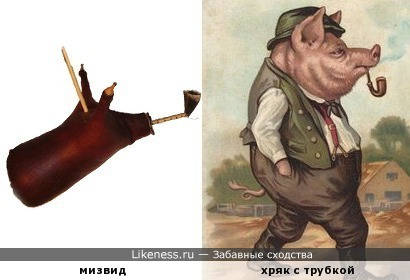 Тунисская волынка мизвид напоминает свинью с трубкой