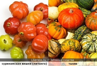 Продолжаем собирать урожай (осенних плодовоовощных лайкнессов)